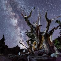 Milky way over Great Basin